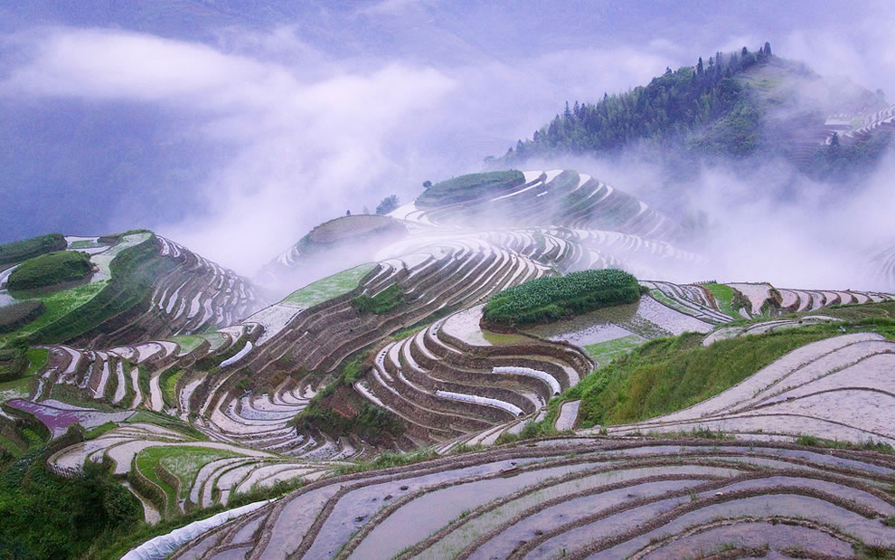 Rice terraces in early morning mist, Guangxi Province, China