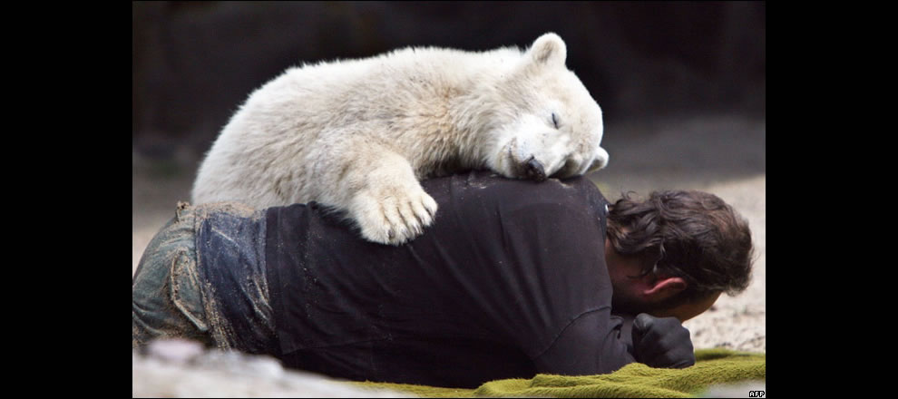 Polar Bear Knut - I love you too