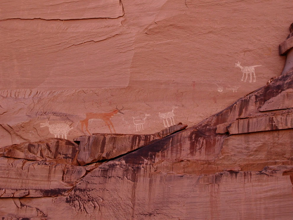 Canyon de Chelly National Monument, Arizona, USA. Rock art panel near Antelope House, showing pronghorn and other animals