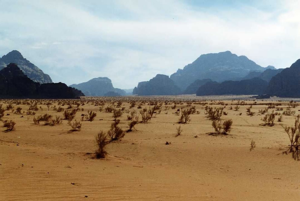 vegetation at Wadi Rum
