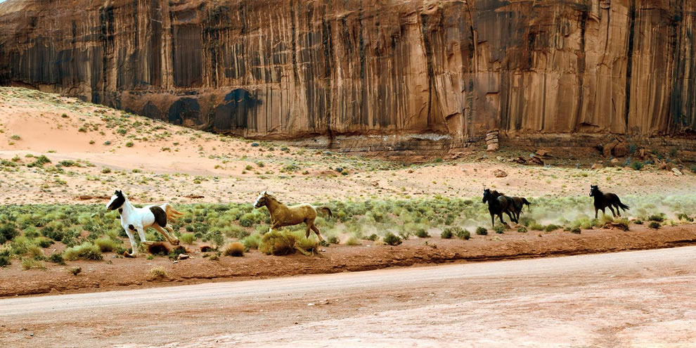 Horses running wild and free at Monument Valley