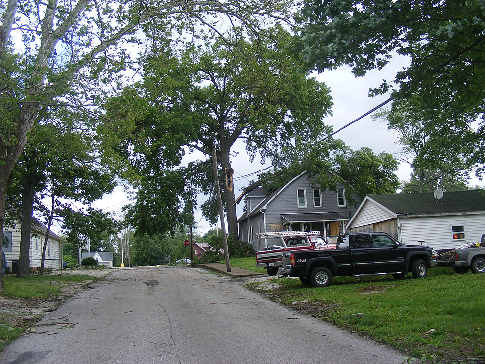 tree branch - more carpenter ants - storm ripped through southern indiana - boonville