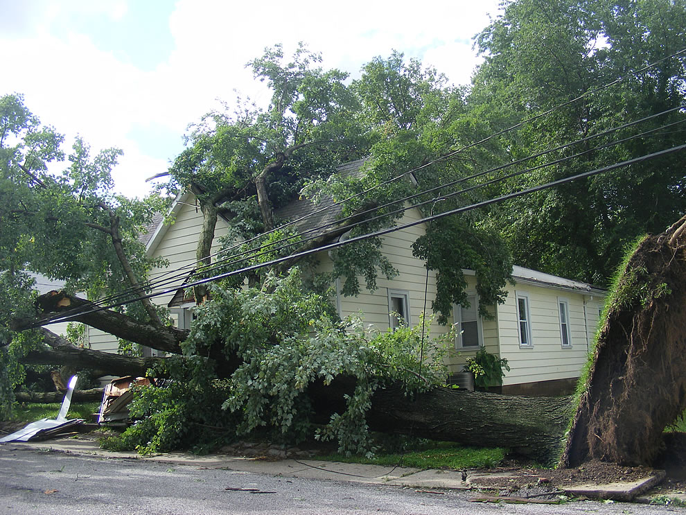 yikes - trees ripped from the ground - boonville indiana