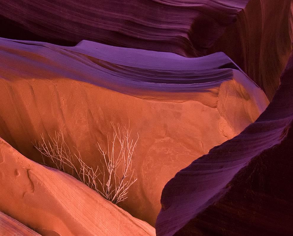 Antelope Canyon Weed