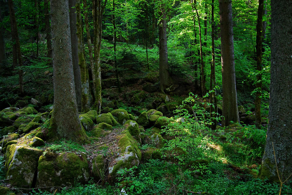Schwarzwald 5-8-11