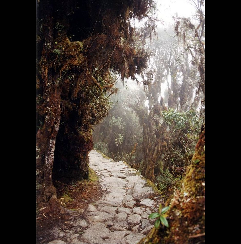 Inca trail