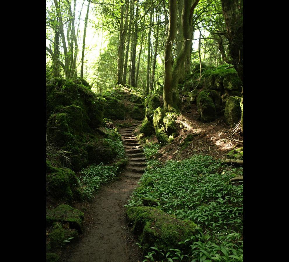 Puzzlewood Tolkien muse