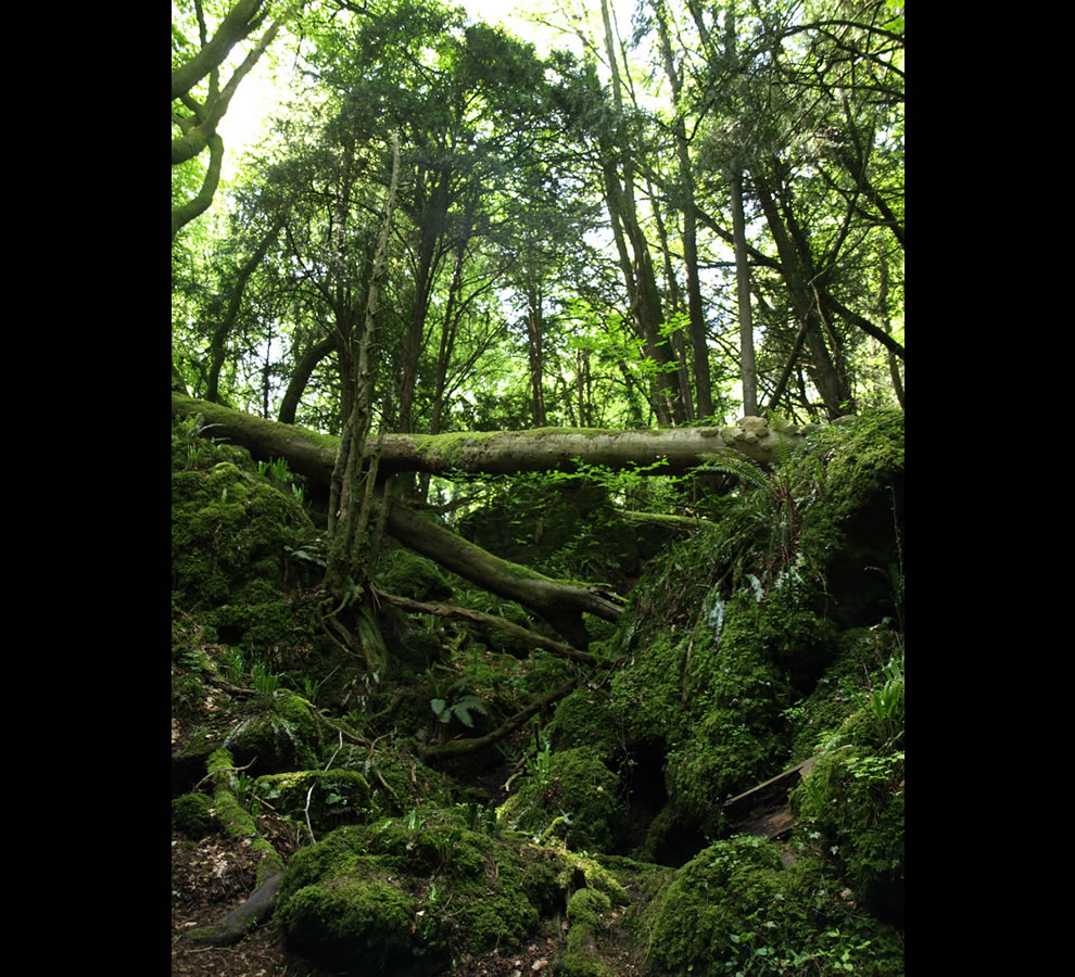Where hobbits hide puzzlewood