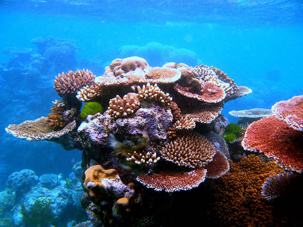 A variety of corals form an outcrop on Flynn Reef, part of the Great Barrier Reef near Cairns, Queensland, Australia