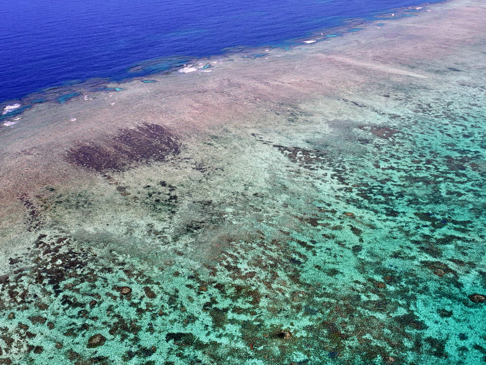 Colorful Great Barrier Reef