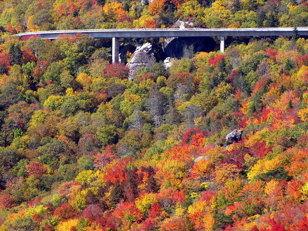 Linn Cove Viaduct in Autumn Splendor, Colorful North Carolina