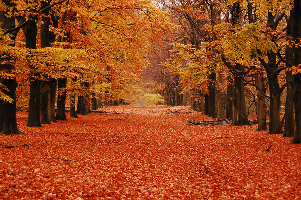 Orgasmic Orange Overload from Hoge Veluwe National Park, Gelderland, Netherlands