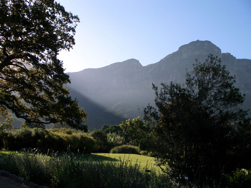 A view of Table Mountain from Kirstenbosh Botanical Gardens, near Cape Town