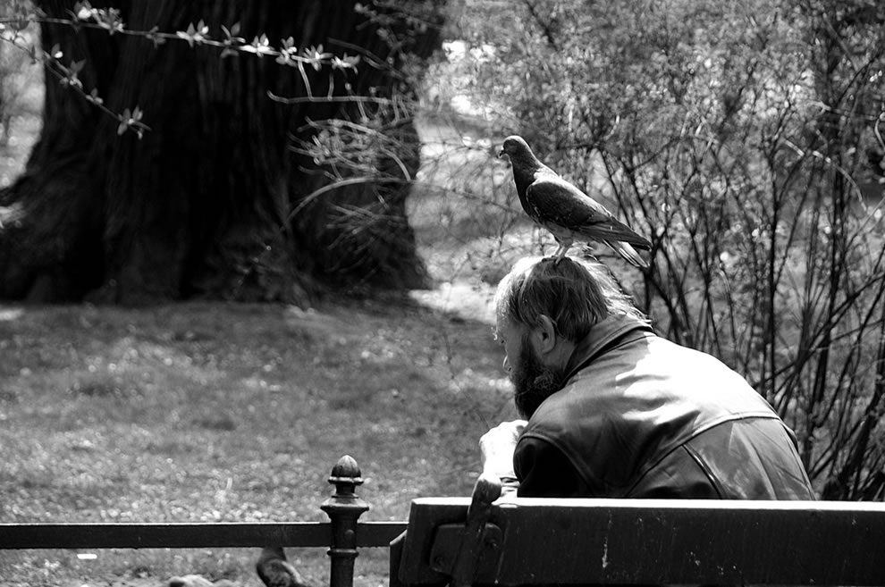 Homeless with pigeon on a head