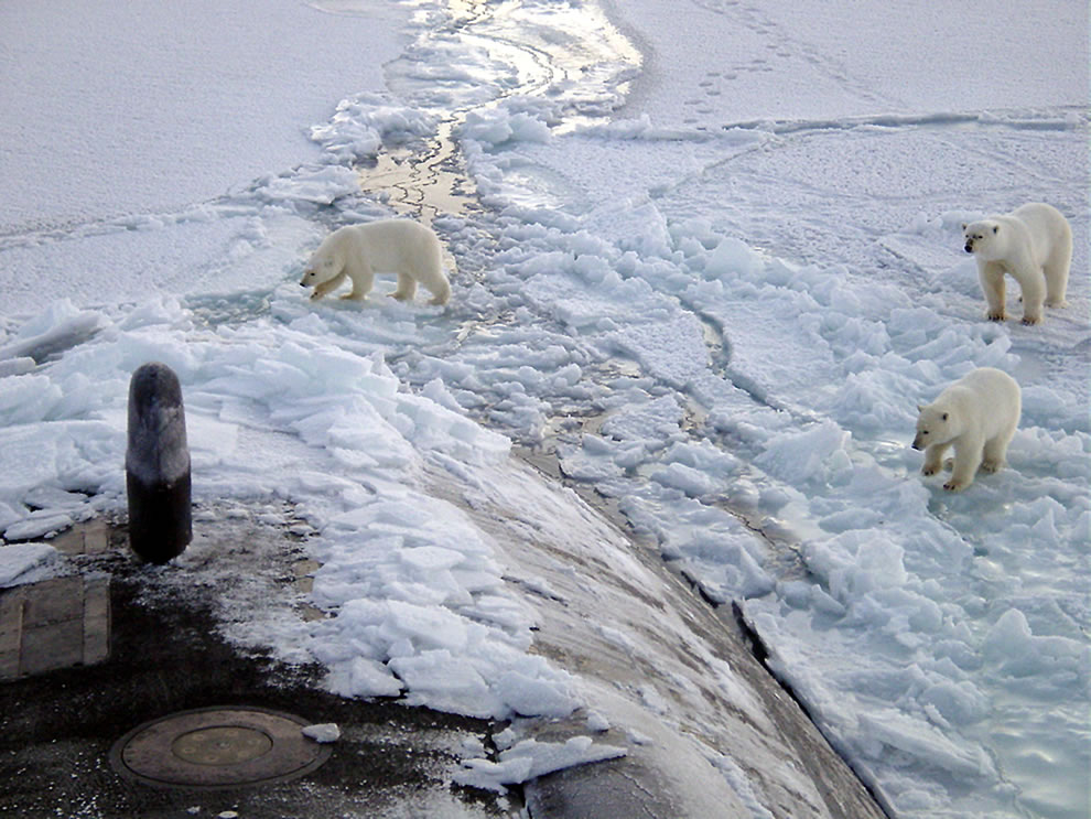 3 Polar bears approach fast attack submarine near North Pole