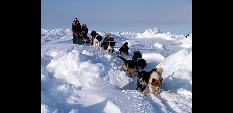 Mush travel by dog sled at the North Pole