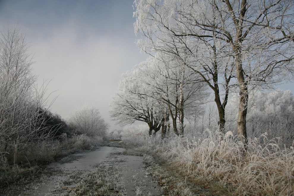 Hoar frost or soft rime on a cold winter day in Lower Saxony, Germany