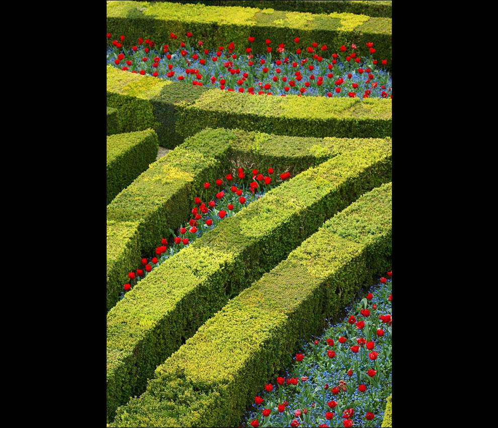 Villandry gardens - detail