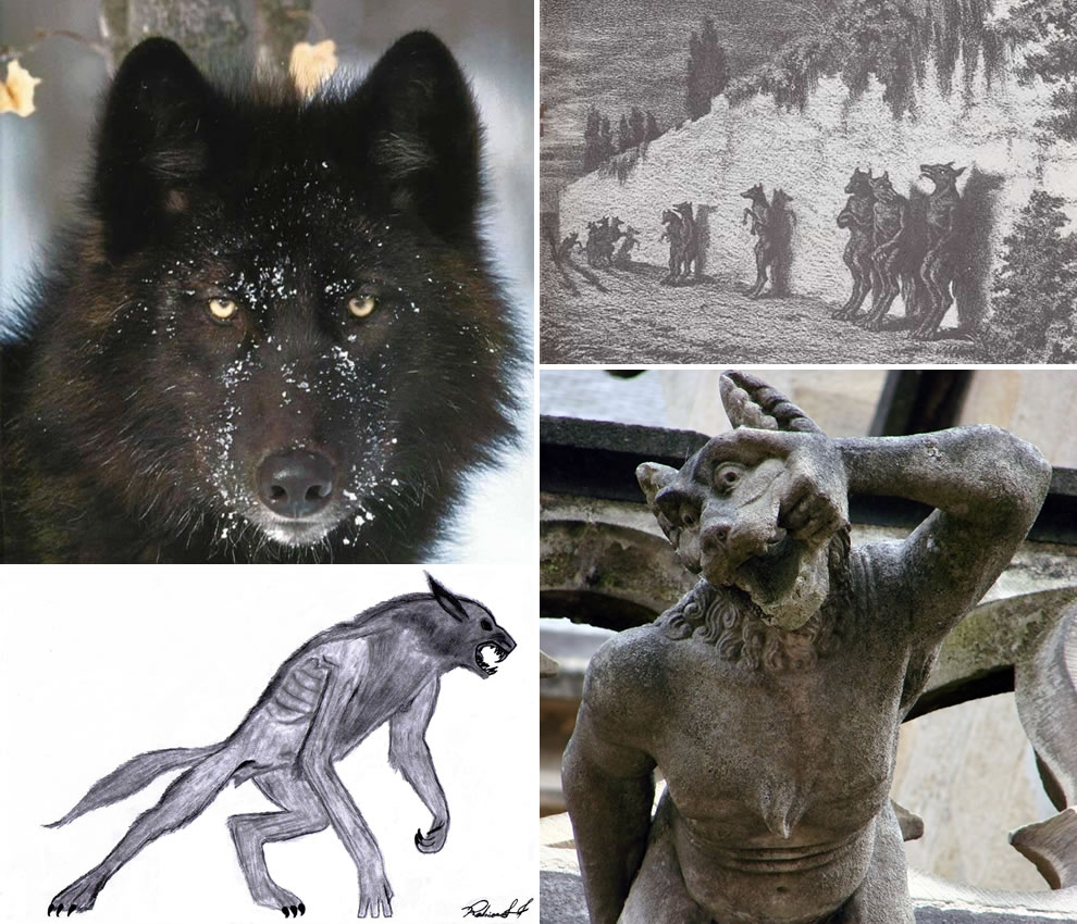 Werewolves - Rise of the Lycans - wolves long feared & weaved into fairy tales and folklore