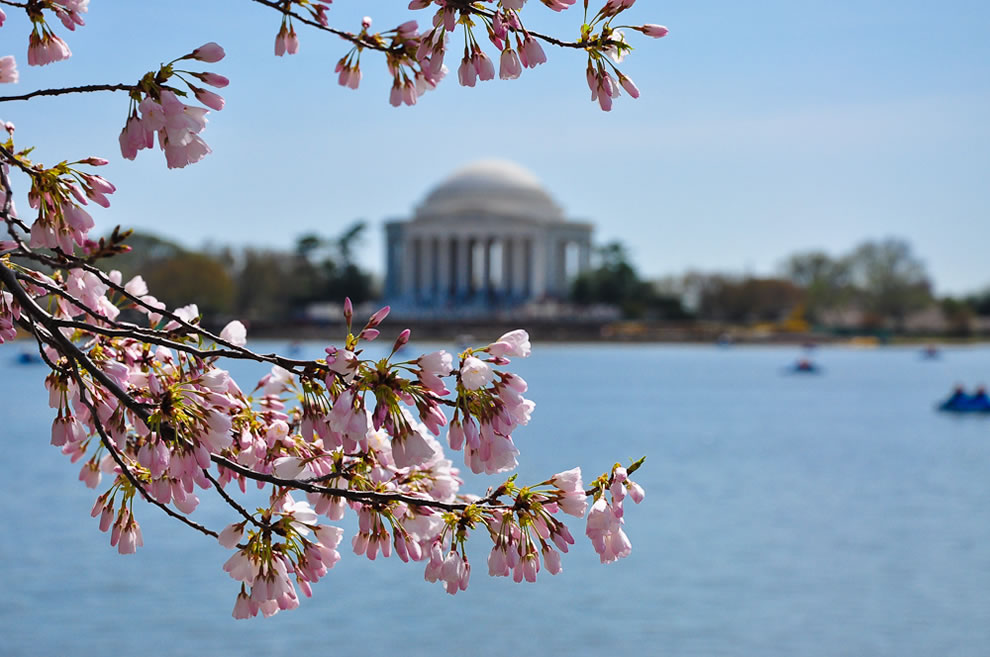 From the 98th Annual National Cherry Blossom Festival. Washington, DC. March 2010