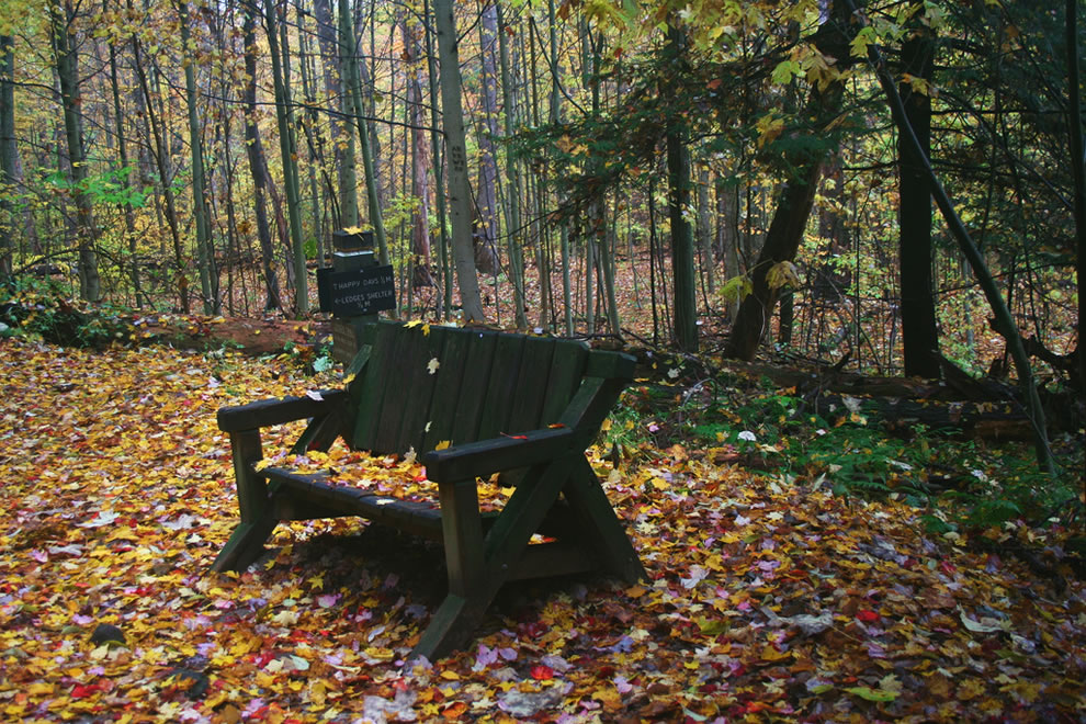 Autumn colors in the woods of Cuyahoga Valley National Park in Ohio