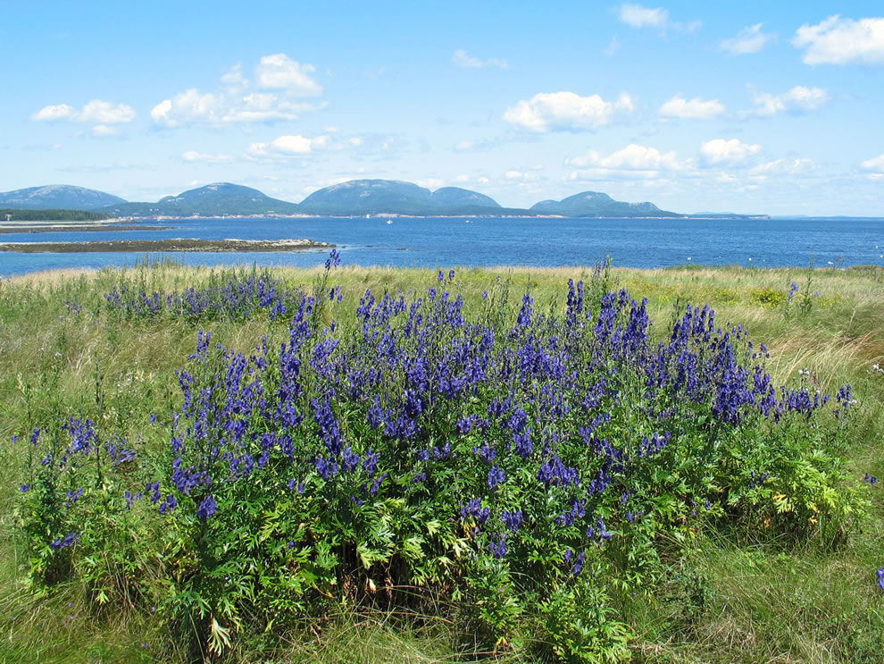 Summer flowers and Baker Island
