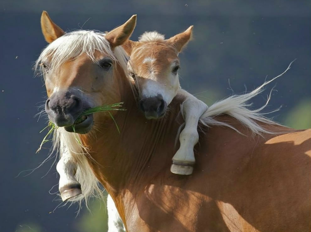 Give your mom a hug, pony wants piggyback ride from mom