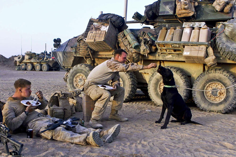U.S. Marine Corps Lance Cpl. Wayne Snelling, left, watches as Lance Cpl. Taylor Slay shares a piece of his steak with Mac, a military working dog, at Camp Leathernick in Afghanistan