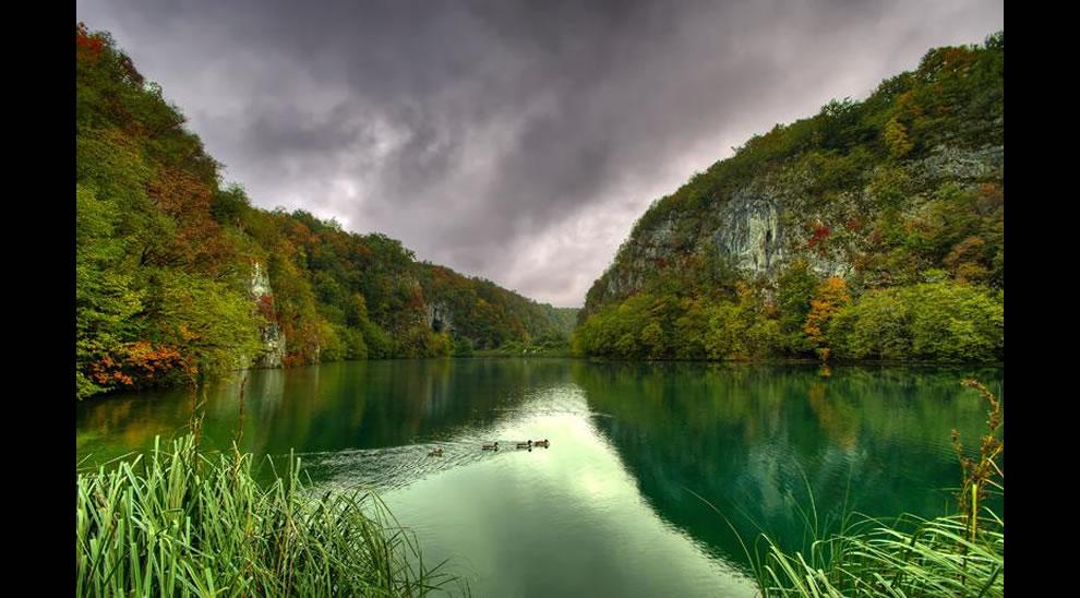 Ducks at Plitvice Lakes