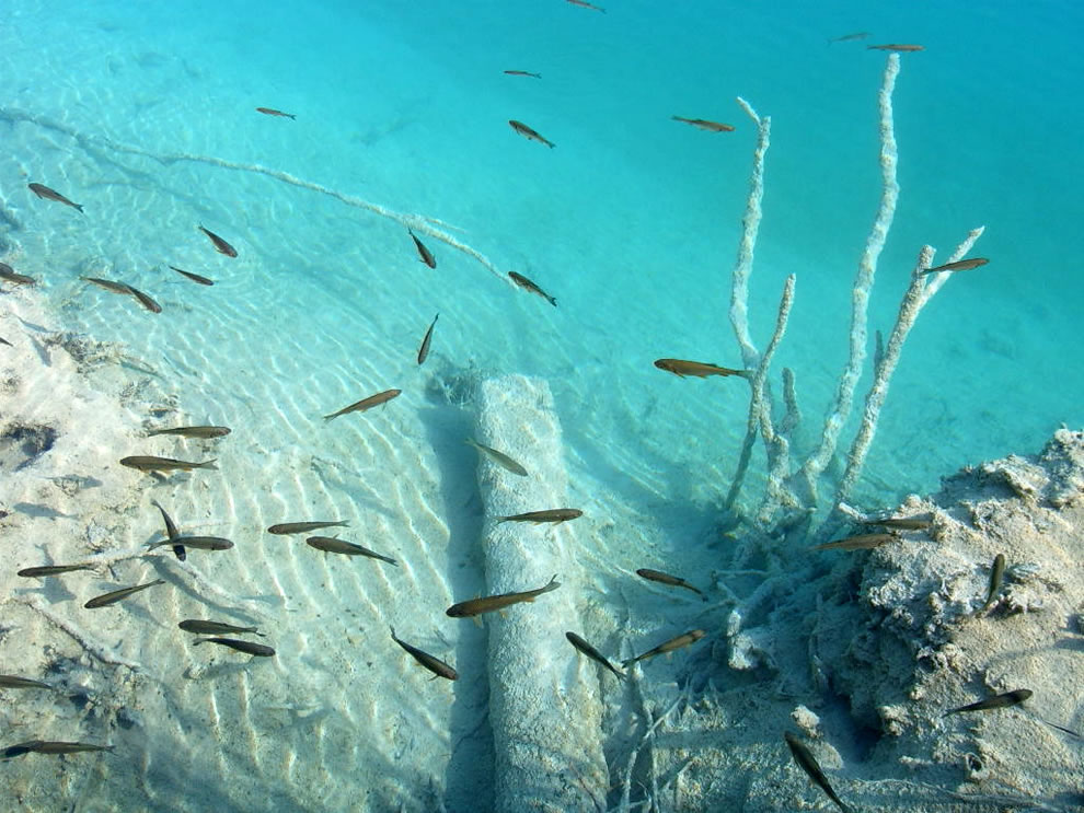 Fish in clear underwater world of the Plitvice Lakes National Park, Croatia