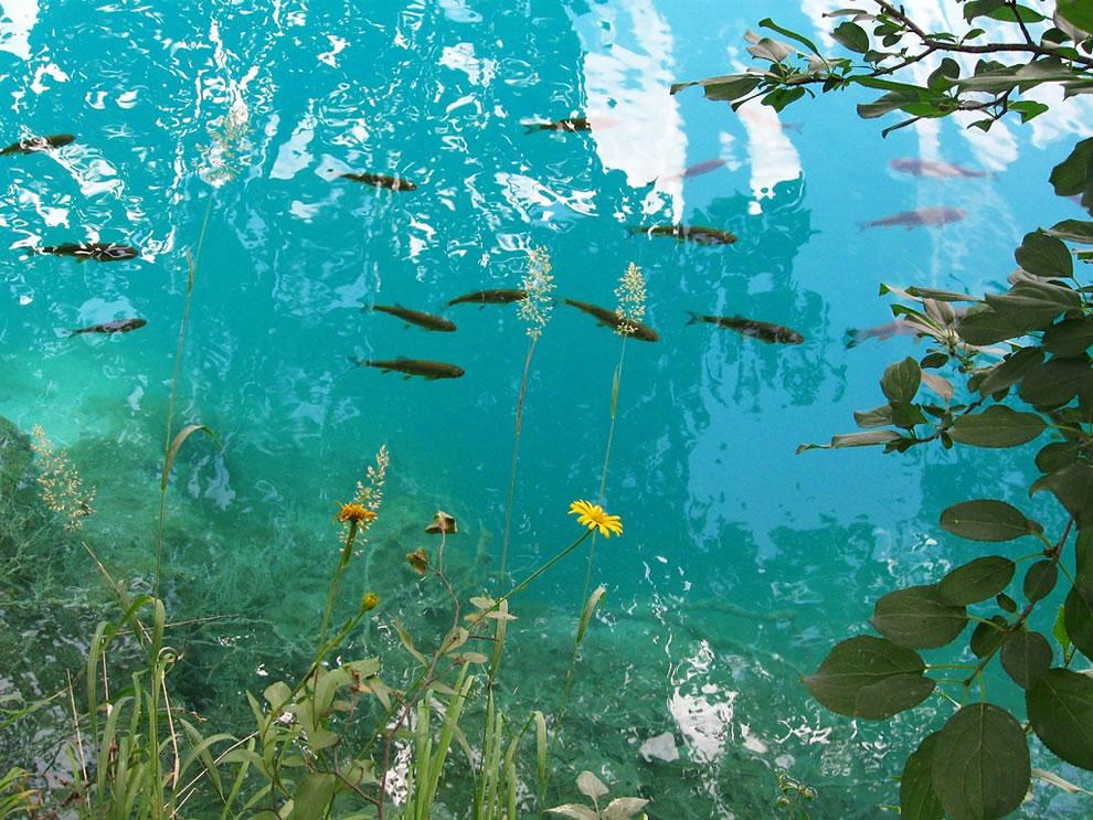 Spectacular blue lakes of Paradise -- Plitvicka jezera, the lakes national park in Croatia