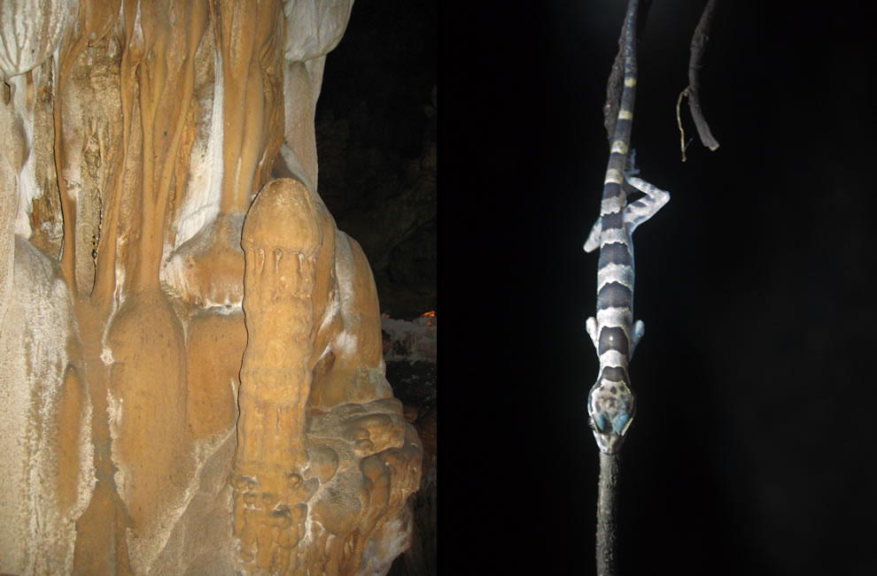 A linga-shaped stalagmite and new species of lizard in a cave in Phong Nha-Ke Bang National Park, Vietnam