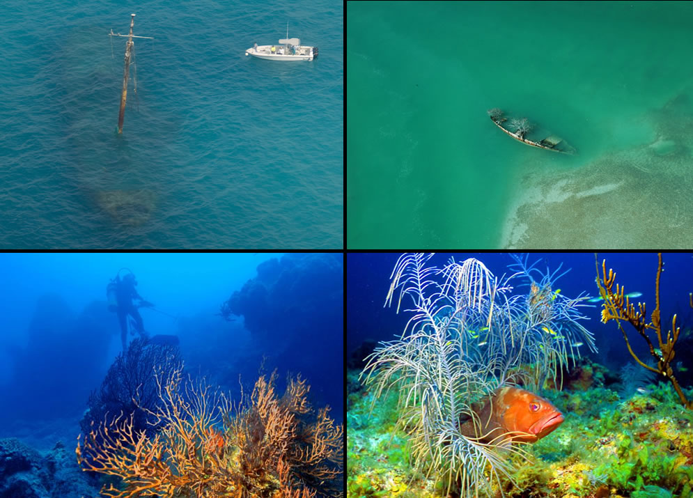 Coral, shipwrecks, Diving at Dry Tortugas National Park
