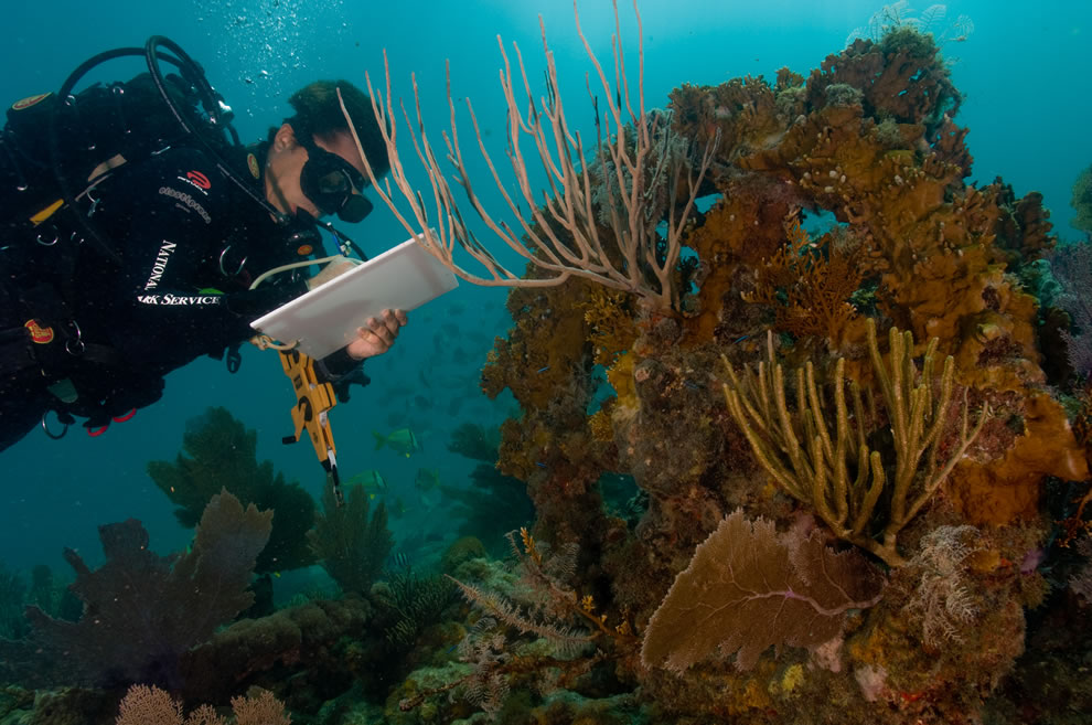 Dry Tortugas Underwater Archaeology
