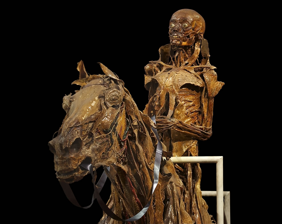 Écorché (with mummification) of a horse and his rider, (detail), made between 1766 & 1771 by the french anatomist Honoré Fragonard