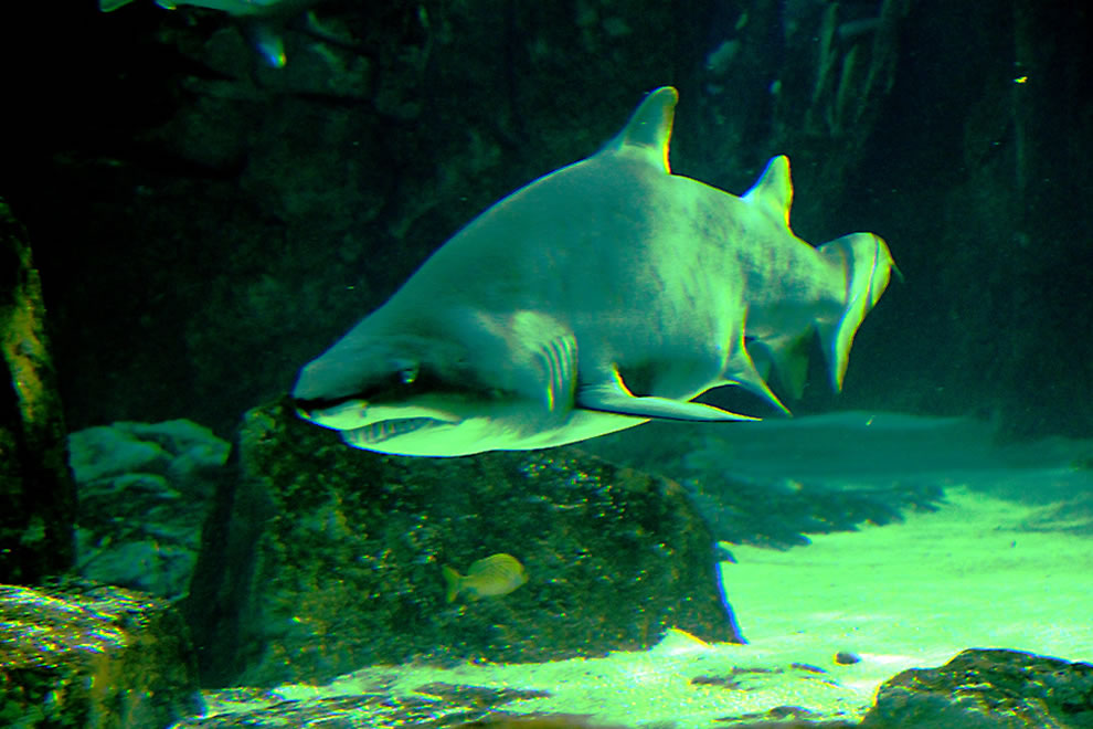 Istanbul Akvarium . . . The other day around the corner . . . SHARK!