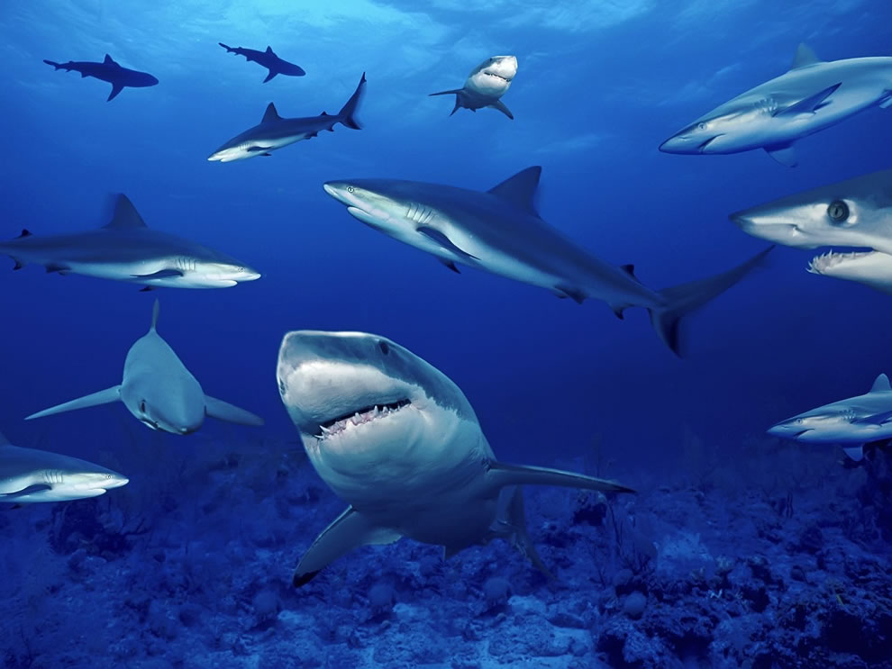 Shark, shark, shark, sharks! That's a lot of sharks!
