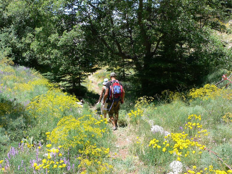 Tannourine Cedar Reserve, Lebanon
