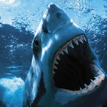 When you see sharks, like this Jaws type, wouldn't you get out of the water?