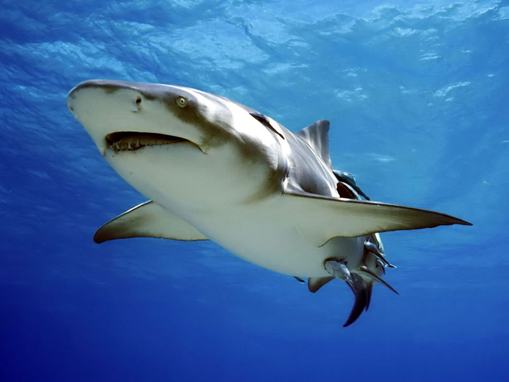 Predators Prowling the Sea: Scary or Stunning, Sharks are ...