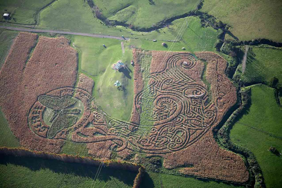 Aerial view of New Zealand corn maze design