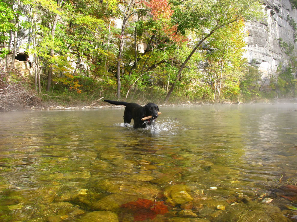 Chilly Morning Fetch at Fall Break, Buffalo National River, Arkansas