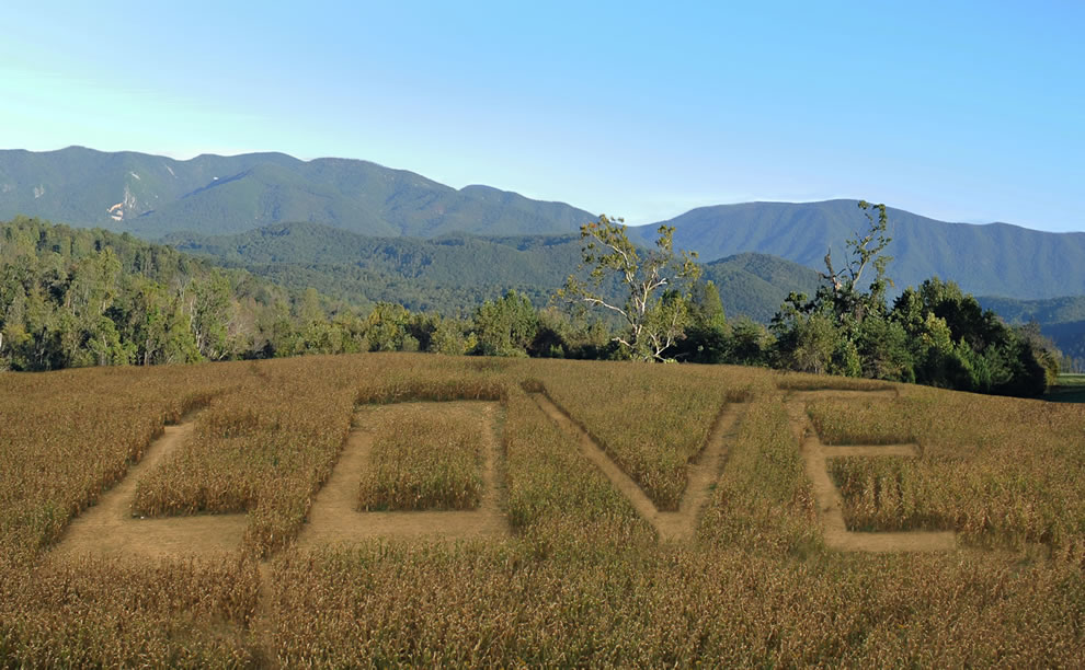 Corn Maze Design Love in Virginia