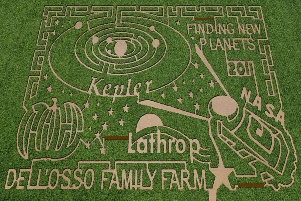 Corn maze at Dell'Osso Farms in Lathrop, California. Photo credit- The MAiZE Inc