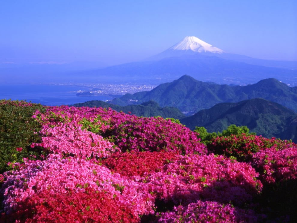 Mt Fugi and flowers