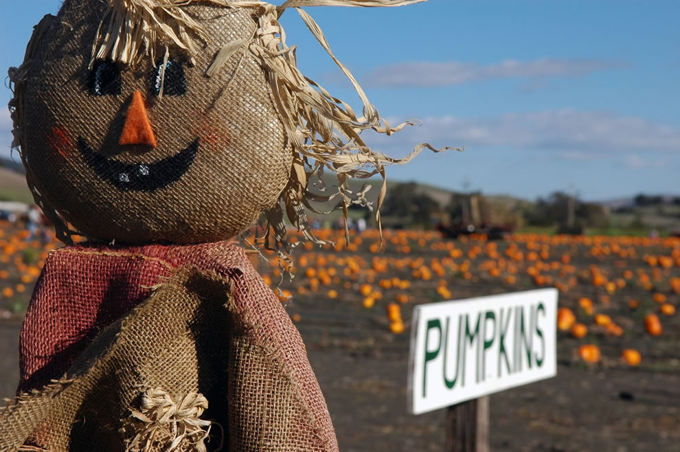 Scarecrow and pumpkin patch at California corn maze