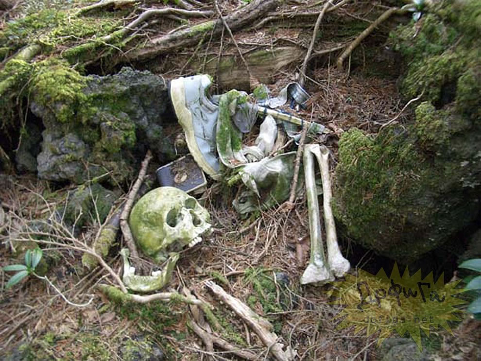 Skull and bones, human remains and evidence of suicide in Aokigahara, Suicide, Forest