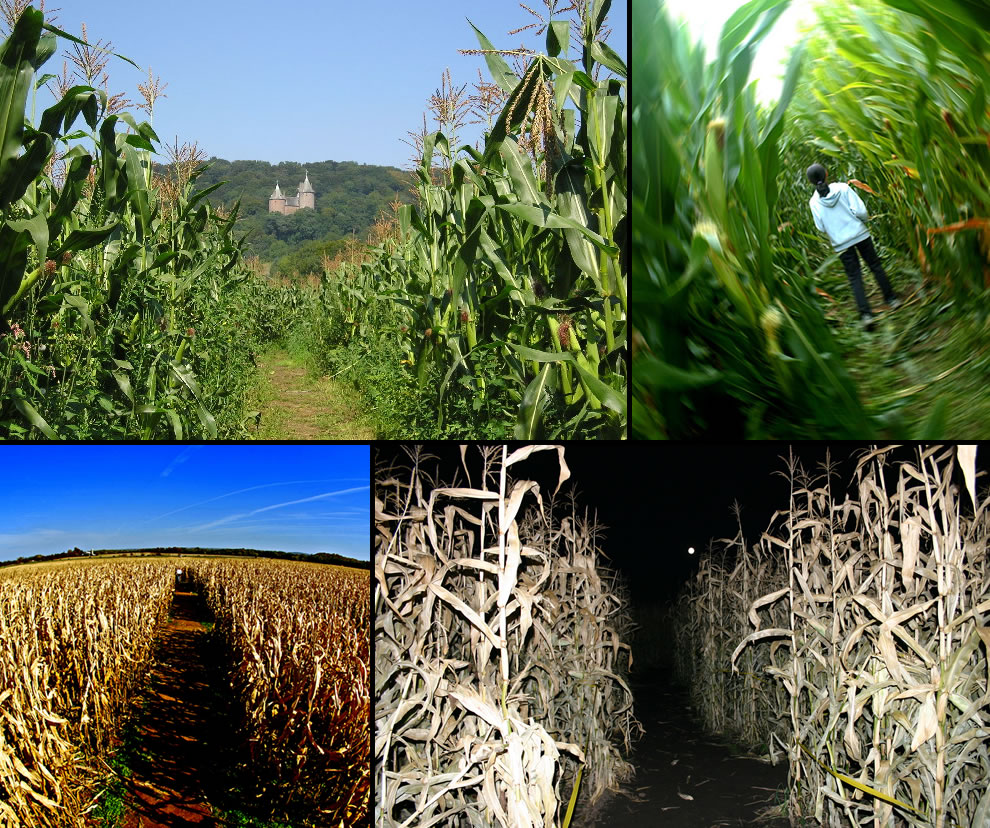 Views from inside corn labyrinths also called maize mazes