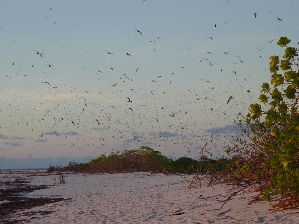 Birds on the Bird Island, Seychelles