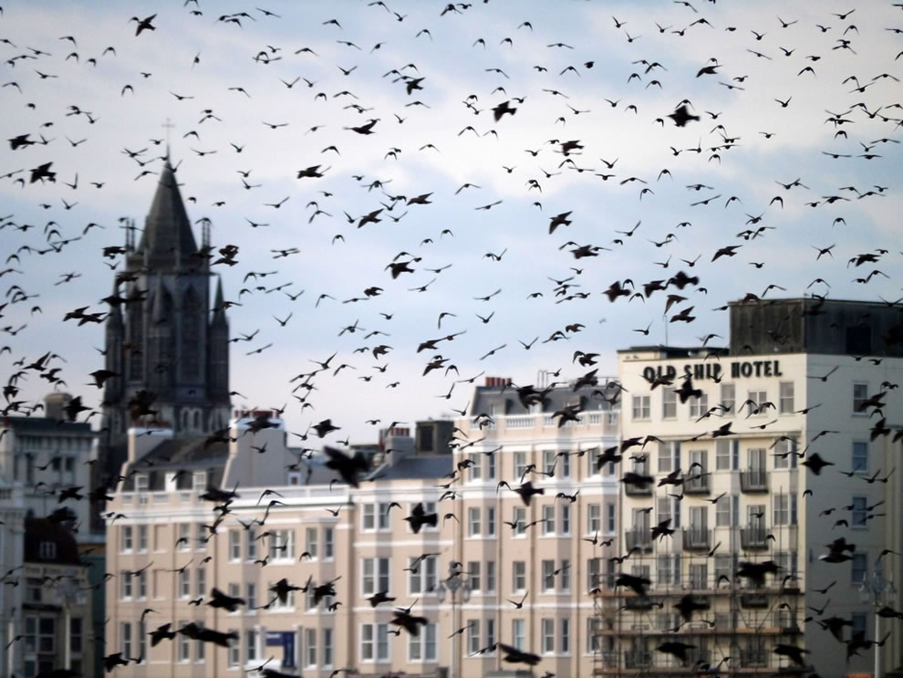 Brighton starlings at Brighton seafront